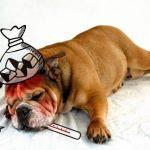 犬の病院代が払えない場合は治療費の後払いや分割も可能?